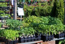 Garden Center Plants For Sale....