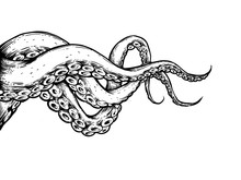 The Tentacles On White Backgro...