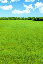 A Vibrant Landscape With An Endless Green Field, Blue Sky, White Clouds And Forest On The Horizon. Post-processing For Large Depth Of Field, Tinting. Summer Or Spring Background
