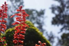 Baguio Burnham Park Flora 2