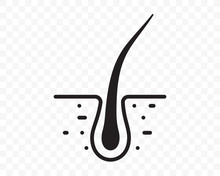 Hair Follicle Vector Line Flat Icon. Hair Bulb In Follicle Pore, Shampoo Treatment, Dermatology And Hair Transplantation Design Element