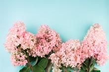 Pink Flower Hydrangea On Light...
