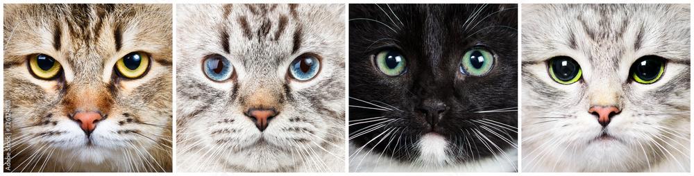 Fototapeta Cat close-up collecton