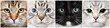canvas print picture - Cat close-up collecton