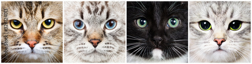 Cat close-up collecton Poster Mural XXL