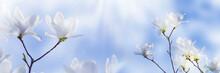 Weiße Magnolienblüten Vor Bl...