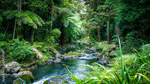 Creek in rain forrest Fototapete
