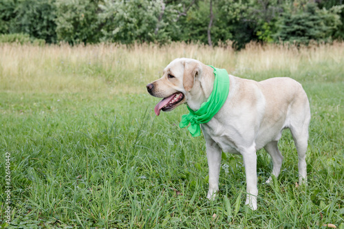 Labrador is always ready for new feats. Canvas-taulu