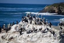 Pelicans On Rock In Ocean Off Of California Coast