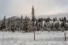 Very Tall Evergreen Tree Stand...