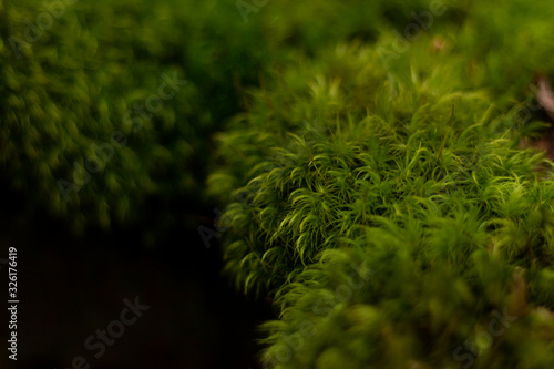 vegetation mousse vert cailloux Canvas-taulu