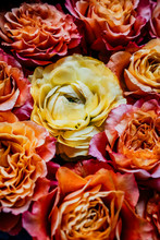 Orange And Pink Roses With Yellow Ranunculus