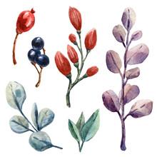 Watercolor Botanical Set