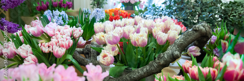 Fresh spring  colorful  tulip flowers banner Canvas Print