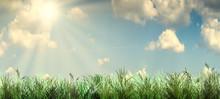 Green Grass Field With Blue Bl...