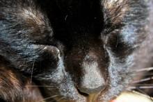Sleeping Cat Face Close Up