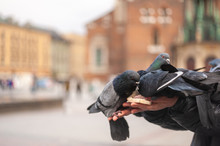 Feeding Pigeons From Hand On B...