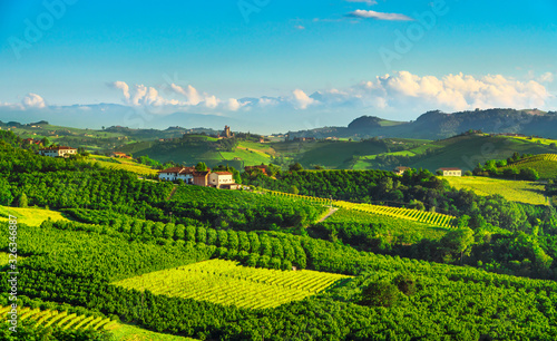 Langhe vineyards and hazel tree cultivation Canvas Print
