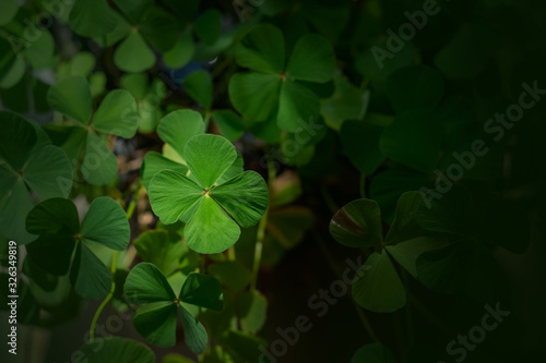Carta da parati clover leaf in lens flare for background and St