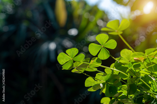 Stampa su Tela clover leaf in lens flare for background and St