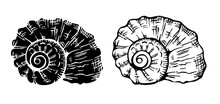 Set Of Two Engraving Nautilus Seashells On White Background.  Black And White Vector Illustration