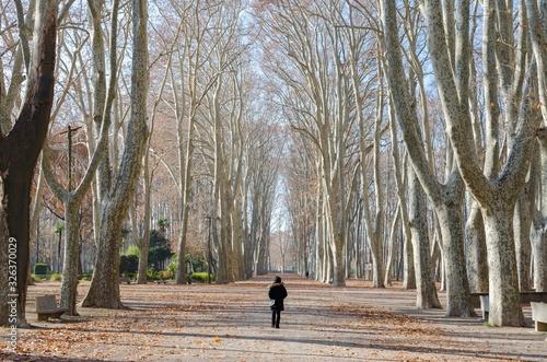 Chica andando en el parque de la Devessa en Girona en un dia de invierno Wallpaper Mural