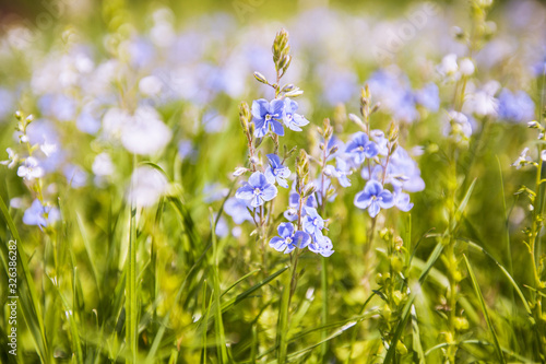 Fotografie, Obraz Spring flowers on the field