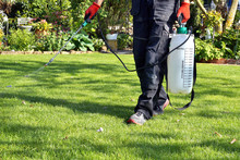 Weedicide Spray On The Weeds In The Garden. Spraying Pesticide With Portable Sprayer To Eradicate Garden Weeds In The Lawn. Pesticide Use Is Hazardous To Health. Weed Control Concept. Weed Killer.
