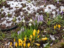 Blumen Erwachen Frühjahr Im Garten