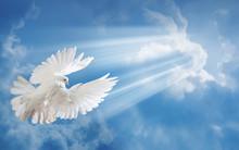 White Dove On Blue Sky