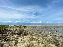 Unusual Landscape Of Mangrove ...