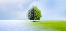 Jahreszeiten Wechsel Vom Winter In Den Frühling Mit Baum