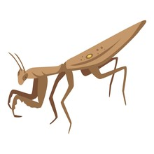 Brown Mantis Icon. Isometric O...