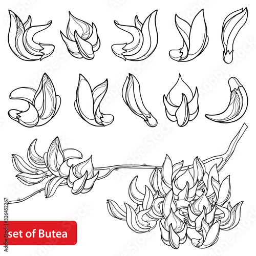 Set of outline tropical Butea or forest flame or bastard teak tree flower bunch and bud in black isolated on white background Wallpaper Mural