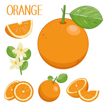 Drawn Fruits Of Oranges, Oranges Pieces And Slices In Different Angles, Vector Collection