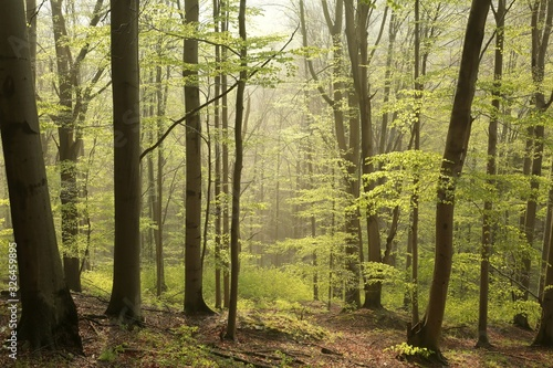 Forest Sunshine View