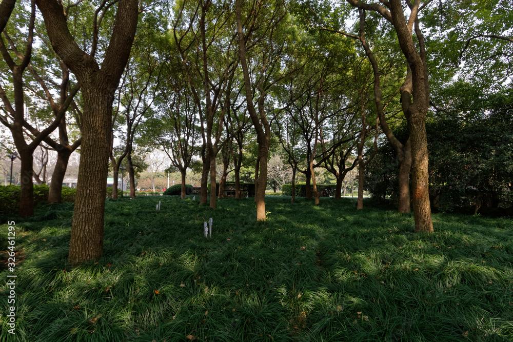 Fototapeta Tradycyjny chińskie ogród