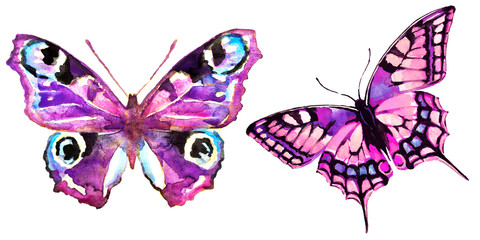 beautiful pink butterfly,watercolor,isolated on a white background