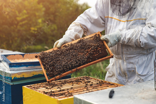Photo Beekeeper is working with bees and beehives on the apiary.