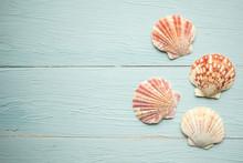 Seashells On Blue Wooden Backg...