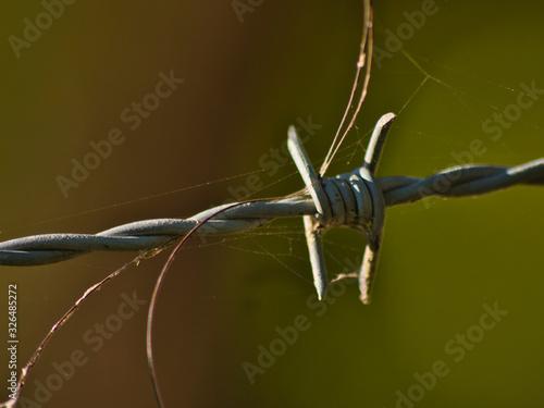 Photo Alambre de espino con pelos de animal