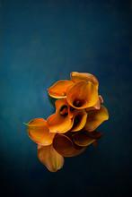 Yellow-pink Calla Lily -