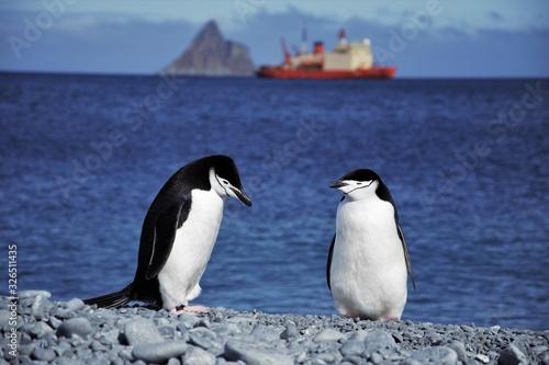 Photo 1 año en la antartida