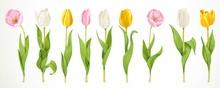 Realistiс Tulips Flowers Pink...