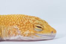 Close Up Of A Gecko