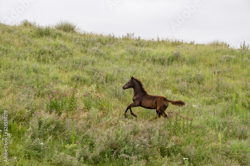 Foal on pasture