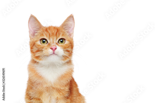 Canvastavla Head portrait of a ginger cat against white background