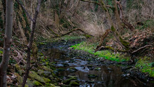 A Flowing Creek Surrounded By ...