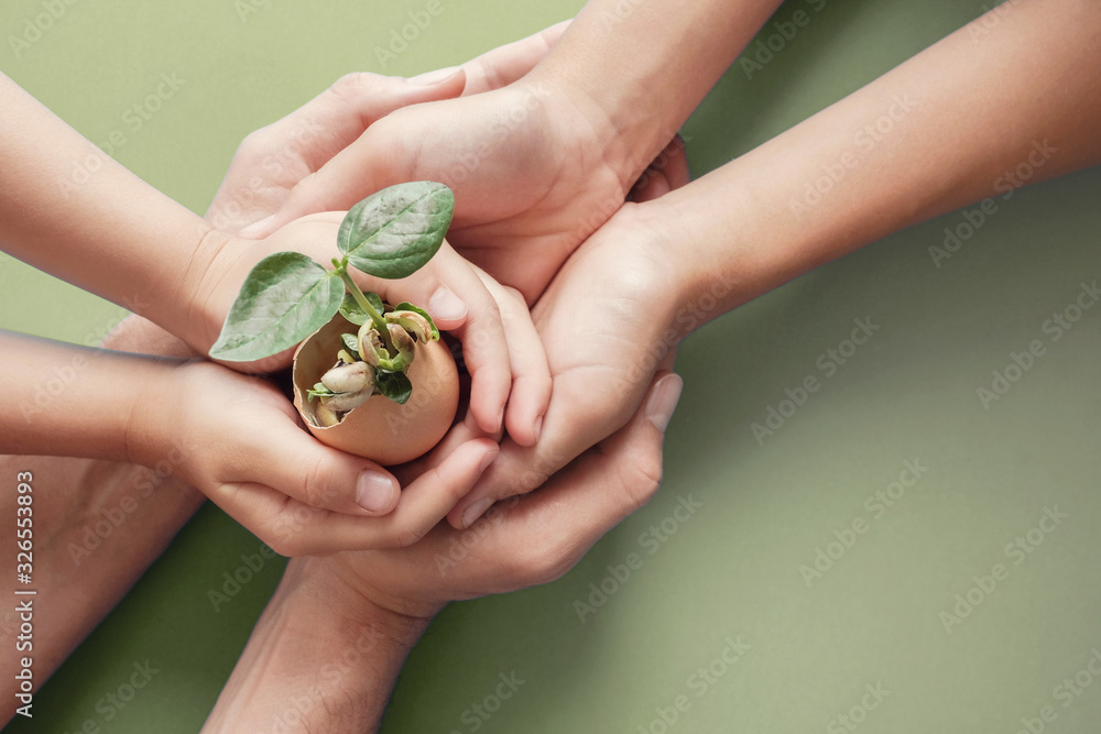 Fototapeta hands holding seedling in eggshells, montessori education , CSR Corporate social responsibility, Eco green sustainable living concept,zero waste, plastic free,world food day, responsible comsumption