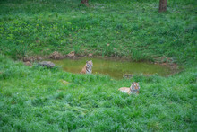 Wild Animals And Natural Landscapes, Natural Park Of Cabárceno, Cantabria, Spain